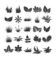 leaves and grass silhouettes on white background vector image vector image