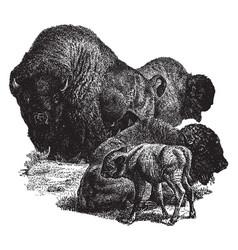 North american bison vintage vector