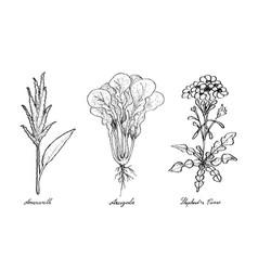 Vegetable salad of hand drawn sketch delicious vector