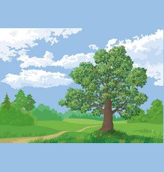 Landscape summer forest and oak tree vector