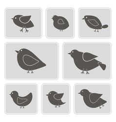 monochrome icons with different birds vector image