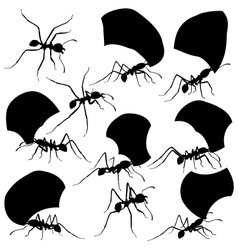 Leaf cutter ants vector image vector image