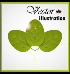 Green leaf isolated on white vector