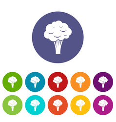 broccoli set icons vector image vector image