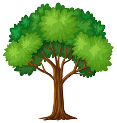 green tree on white background vector image vector image