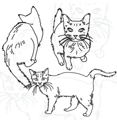 Three cats painted lines vector