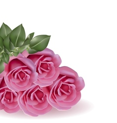 Bouquet pink roses on white background vector image vector image