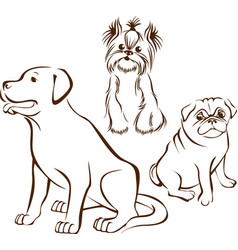 set of dogs breeds vector image