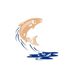 Atlantic salmon fish jumping water isolated vector