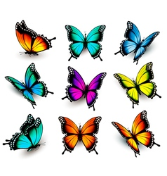 Collection of colorful butterflies flying in vector