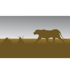Silhouette of lion in fields vector