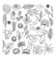 Flowers and leaves of tropical plants vector