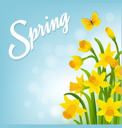 Spring card with narcissus vector