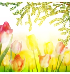 Spring Beauty tulips flower EPS 10 vector image