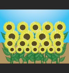 sunflower garden vector image