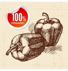Hand drawn sketch vegetable peppers eco food vector