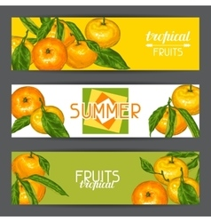 Banners with mandarins tropical fruits and leaves vector