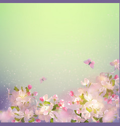 spring apple blossom vector image vector image