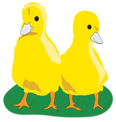 Yellow chicks vector