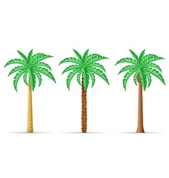 Palm tree 29 vector