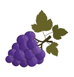 Bunch of grapes fruit vector