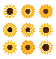 Sunflower emblem set vector