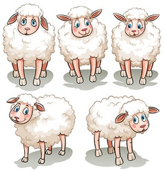 Five white sheeps vector