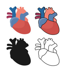 Anatomical heart - flat graphic vector