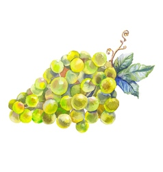 Grapes watercolor prewew vector