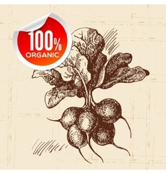Hand drawn sketch vegetable radish eco food vector