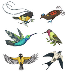 small birds of paradise barn swallow or martlet vector image vector image