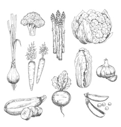 Fresh vegetables sketch for vegetarian food design vector