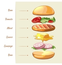 Hamburger ingredients infographics vector image