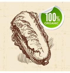 Hand drawn sketch vegetable pe-tsai Eco food vector image vector image