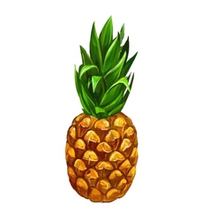 Fruit pineapple hand drawn vector