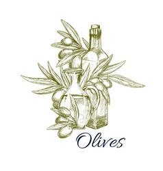 Olives and olive oil bottles sketch vector