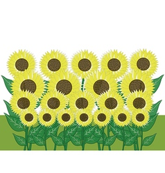 sunflower in the garden vector image