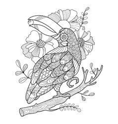 Toucan bird coloring book for adults vector image