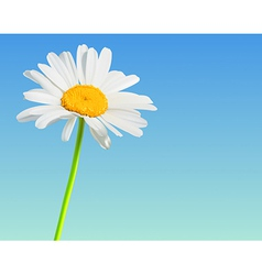 Flower nature background Chamomile bloom vector image vector image