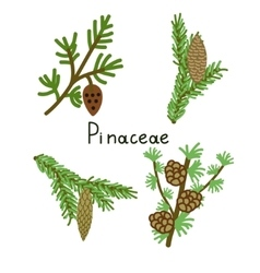 Pinaceae plants set vector