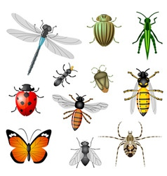 insects or bugs vector image
