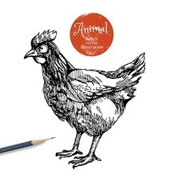 Hand drawn chicken farm animal sketch hen i vector
