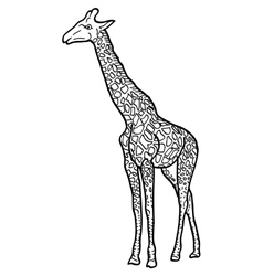 Sketch of a high african giraffe on white vector