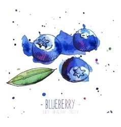 Watercolor blueberries with splashes in free style vector