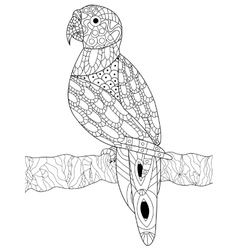 Parrot coloring for adults vector