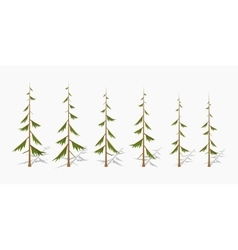 Shabby pine trees vector