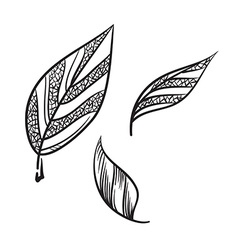 Tea leaves hand drawn tea leaves icon vector