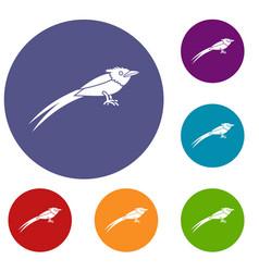 Asian paradise flycatcher icons set vector