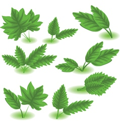 Spring leaves vector