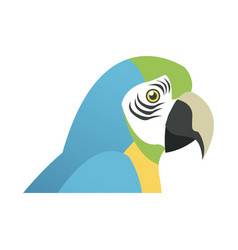 Blue and yellow macaw parrot brazil vector